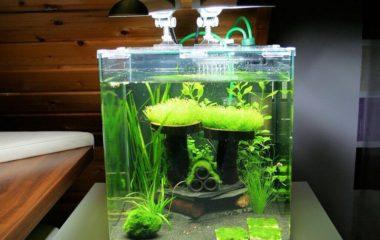 Avec ces différentes formes et dimensions, les accessoires qu'on peut y associer, un aquarium constitue un véritable élément de décoration intérieur. Mais au-delà de ce côté esthétique, certains paramètres « techniques » doivent également être pris en compte, notamment pour un meilleur épanouissement des poissons.