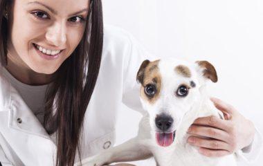 Un aide aux soins animaliers a pour principale mission de veiller au confort des animaux. Ses rôles vont de la préparation de leur nourriture jusqu'au nettoyage de leurs nids. Bien évidemment, ses différentes tâches varient selon les caractéristiques de l'animal. Le métier d'aide aux soins animaliers est une profession passionnante. Il vous permet de côtoyer […]
