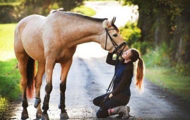 Si on veut acquérir un cheval, c'est probablement qu'on les aime ou qu'on adore l'équitation. Mais aimer ce superbe animal est une chose, l'élever en est une autre. Avant de faire l'acquisition de son propre cheval, il faut savoir un certain nombre de choses