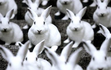 Vous souhaitez élever des lapins et des lapereaux ? Vous devez tout connaître de l'élevage de lapin avant de vous lancer. Plus bas, découvrez tout ce qu'il faut savoir de l'élevage des lapins.