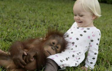 Proche parent de l'homme, le singe est le genre d'animal de compagnie auquel on s'attache très facilement. Entre ses crises de colère, d'angoisse, sa joie et son dynamisme incontrôlable fait de lui un être très passionnant. Avoir un chimpanzé auprès de soi, c'est ne jamais s'ennuyer ni manquer d'entrain. Toutes ces raisons font que le […]
