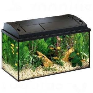 Avoir Un Aquarium avoir un aquarium chez soi : comme bien entretenir de ses poissons