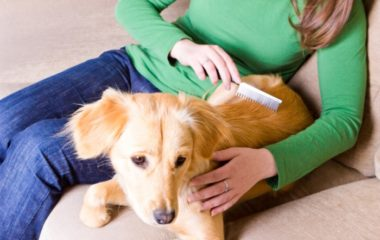 Les chiens sont des animaux très susceptibles par la contagion des parasites externes. Ainsi, en tant que propriétaires, nous devons prendre des mesures particulières pour qu'ils soient bien protégés afin qu'ils demeurent en bonne santé et qu'ils aient une bonne hygiène. Il faut savoir que différents types de parasites externes peuvent toucher les chiens. Voici […]