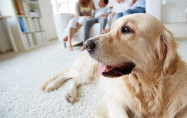 Avoir un chien, c'est lui consacrer quotidiennement du temps pour assurer son bien-être, son confort, et aussi, et surtout sa santé. Vous avez adopté un chien et vous l'aimez beaucoup. Voici nos conseils pour vous aider à garder votre compagnon à quatre pattes aussi dynamique et en forme.