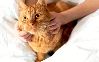 Avoir un chat à la maison peut être source de réconfort. C'est un ami très affectueux qui ne vous laissera jamais tomber quand vous êtes moroses. Cependant, si vous comptez en adopter un, il faudra faire quelques modifications chez vous afin de permettre à votre animal de se sentir à l'aise. Voici entre autres quelques […]