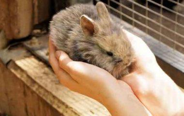 Vous êtes à la recherche d'un animal de compagnie à vos petits ? Cependant, vous trouver que les chats et les chiens constituent de trop gros investissements ? Il vous reste une alternative : les lapins. Le point.