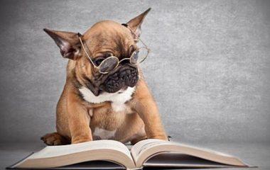 Vous aimez les chiens, mais vous n'en avez jamais élevé ? Si vous désirez en adopter maintenant, nous vous proposons ce petit guide vous permettant d'apprendre à bien éduquer un chien et à le dresser de manière correcte.