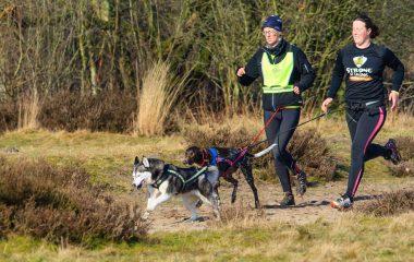 Vous adorez courir avec votre animal? Alors, faites du canicross avec votre chien. Mais attention, ce sport ne doit pas être source de souffrance pour l'animal! Voici 3 blocs de conseils pour vous aider à bien vous y prendre lors de vos séances d'entraînement avec votre chien. Surtout, ne négligez pas ces entraînements, car un […]