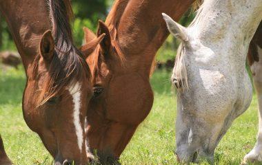 Les compléments alimentaires pour chevaux se sont beaucoup développés ces dernières années. Il en existe différents types sur le marché. Pour choisir le bon produit, il est d'abord important de définir les raisons pour lesquelles vous souhaitez en donner à votre cheval. Nos quelques conseils peuvent vous aider à choisir.
