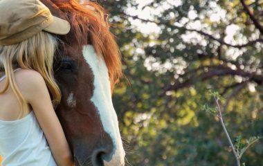 Vous souhaitez faire l'acquisition d'un cheval ? Cela est tout à fait possible, seulement, il n'est pas uniquement question de moyens financiers, il s'agit surtout d'une grande décision qu'il ne faut pas prendre à la légère. Adopter un cheval, c'est vous engager pour la vie à prendre soin de lui, à veiller sur sa santé, […]