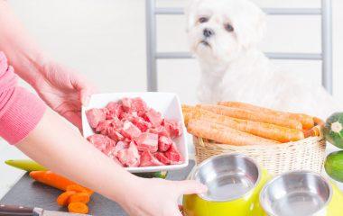 Parce que c'est votre compagnon, vous avez envie d'offrir le meilleur pour votre chien. Pour son bien-être, vous avez envie de lui préparer une alimentation mixte. Cela signifie que, certaines fois, vous lui donnerez des croquettes pour chien, et par moment, vous lui préparerez une alimentation naturelle. Cette dernière présente pas mal d'avantages.