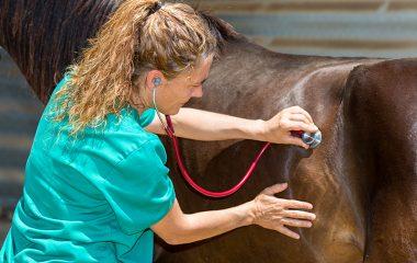 Parmi les maladies les plus courantes chez les chevaux, on retrouve la colique. Comment traite-t-on cette maladie chez les chevaux ?