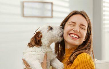 Est-ce que vous aimez les animaux ? Est-ce que vos enfants en aimeraient en avoir un à la maison ?Si vous envisagez une adoption, c'est une excellente idée mais c'est une décision lourde de conséquences et vous devriez prendre le temps de la réflexion avant de vous lancer. Ne vous précipitez surtout pas pour aller […]