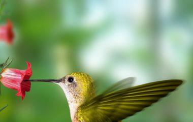 Les oiseaux du jardin ont beaucoup de mal à subvenir à leur besoin nutritionnel pendant l'hiver. En d'autres termes, l'hiver est particulièrement difficile pour ces animaux sauvages. Si vous aimeriez les aider à traverser cette période de l'année, sachez qu'il y a quelques choses que vous pourrez faire.
